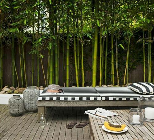 bambou-jardin